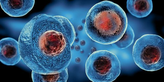 Busting Three Stem Cell Myths Houston, TX